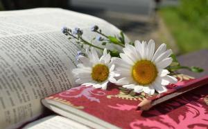 book daisies